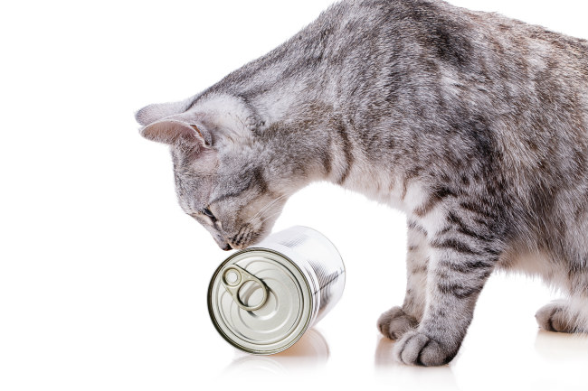Wet Cat Food Reviews
