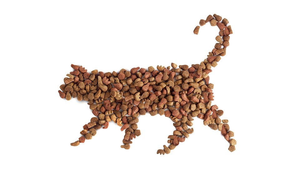 Why Dry Food Is Bad For Your Cat