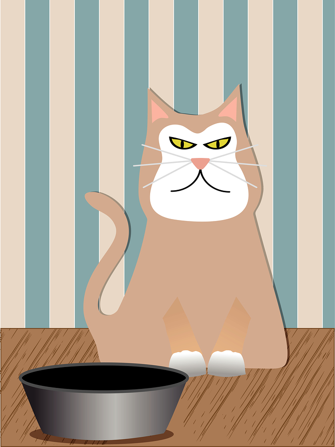 3 Ways To Get Your Picky Cat To Eat