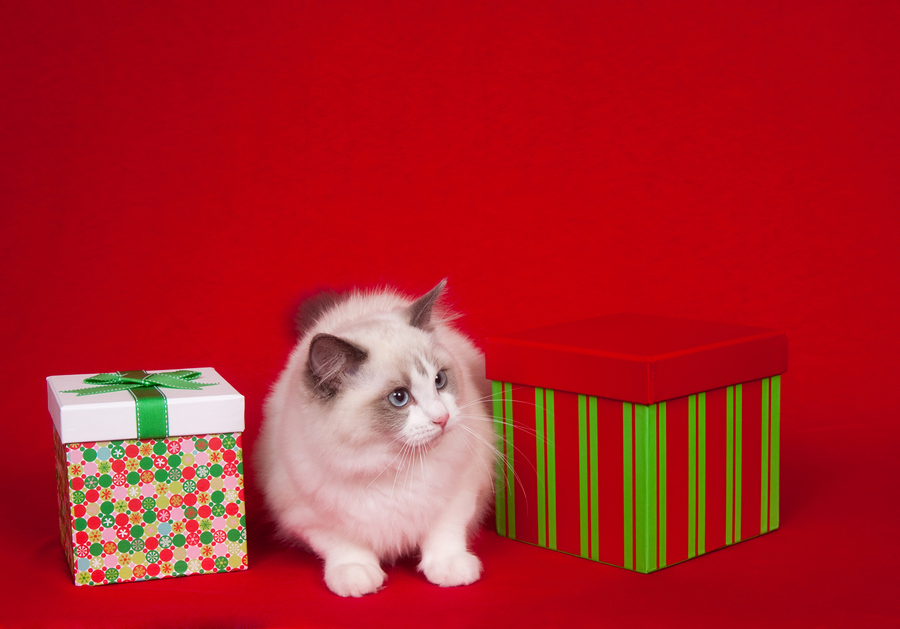 Holiday Gifts For Your Cat Should Include A Top Rated Cat Food