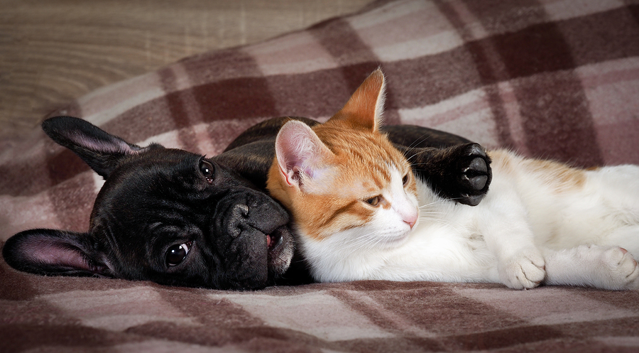 How To Manage Having A Cat And A Dog
