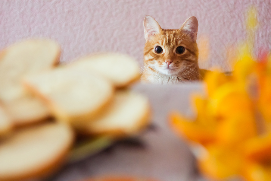 What Foods Are Safe For Your Cat To Eat?