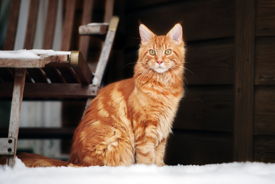 Kitty It's Cold Outside! Best Diet For Outdoor Cats