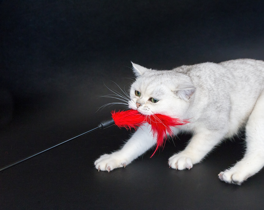 The 5 Best Ways To Exercise Your Cat